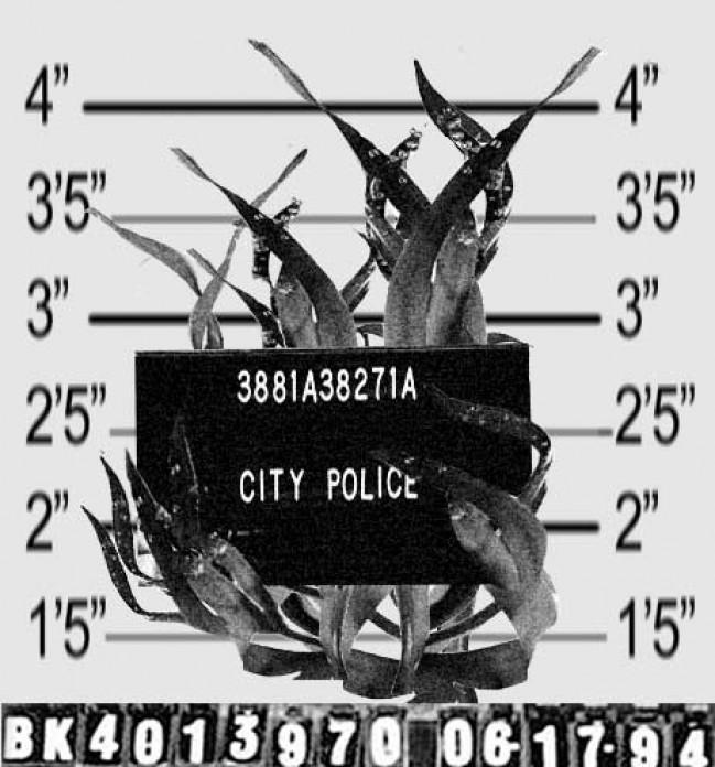 Sebadal criminal
