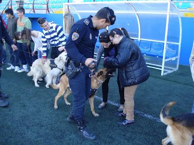 Un miembro de la policía realiza un control con perros adiestrados para la localización de pulseras de goma