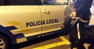 La cabra fue capturada y enviada dependencias policiales sin conocer sus derechos ni los cargos en su contra
