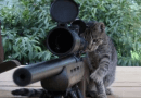 Los gatos de Santa Cruz advierten a Díaz Guerra que no sabe «dónde se está metiendo»